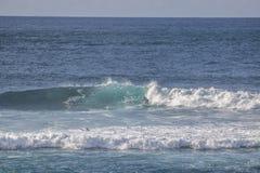 冲浪者在费埃特文图拉岛 库存图片