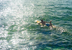 冲浪者游泳 库存图片