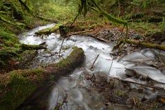 冲的雨林小河,太平洋西北地区 库存图片