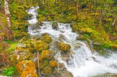 冲的水在一个嫩绿的森林里 免版税图库摄影