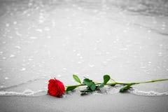 冲走从海滩的波浪一朵红色玫瑰 反对黑白的颜色 爱 库存图片