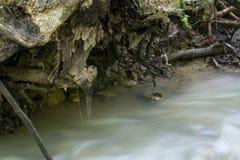 冲通过树根的Waqter 免版税图库摄影