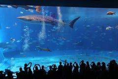 冲绳岛- 10月9日:冲绳岛Churaumi水族馆在冲绳岛, 2016年10月9日的日本 免版税库存图片