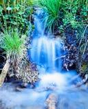 冲绿色草地早熟禾植物的小河瀑布 免版税图库摄影