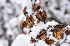 冷冻愉快的灌木的冻结的冬天 库存照片