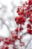 冷冻红色果子 免版税库存图片