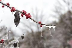 冷冻红色果子 免版税图库摄影