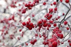 冷冻红色果子 库存图片