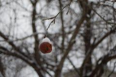 冷冻苹果 库存图片