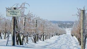 冷冻葡萄树 免版税库存照片