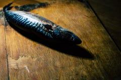 冷冻鲭鱼为晚餐做准备 库存照片