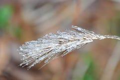 冷冻麦子 免版税库存照片