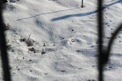 冷和雪白背景 冷淡好日子和凉快 r 酥脆雪纹理在地面上的 免版税库存照片