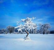 冷夜间冬天 免版税图库摄影