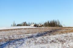 冷日荷兰公园雪冬天 免版税图库摄影