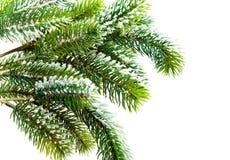 冷杉下雪结构树 库存照片
