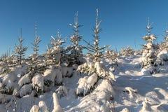 冷杉下雪结构树 免版税库存照片