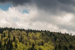 冷杉与多雨云彩的森林风景 免版税库存图片