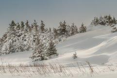冷杉冬天风景 免版税库存图片