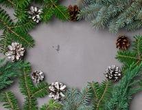 冷杉分支和杉木锥体在灰色背景 库存照片
