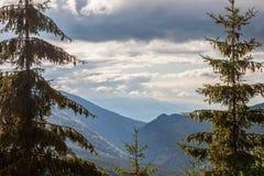 冷杉和其他杉树在山在Vidra湖Lacul Vidra附近在伸出谷的夏天/秋天下午的一个多云结尾 图库摄影
