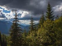 冷杉和其他杉树在山在Vidra湖Lacul Vidra附近在伸出谷的夏天/秋天下午的一个多云结尾 库存照片