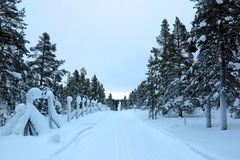 冷杉木侧一条偏僻的积雪的路 库存照片