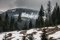 冷杉木和多雪的山 免版税库存图片