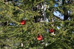 冷杉木在用三个红色圣诞节中看不中用的物品装饰的森林里 图库摄影