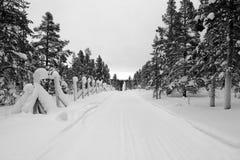 冷杉木排行黑白一条偏僻的积雪的路 库存照片