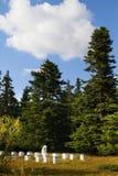 冷杉木的蜂农 免版税库存照片