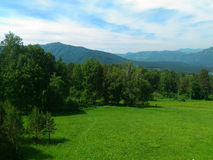 冷杉木,晴朗的天气,夏天风景,绿色树,在阴霾,狂放的自然的山上面  免版税库存图片