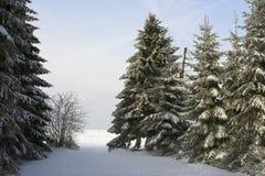 冷杉杉木多雪的结构树 免版税库存照片