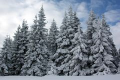 冷杉森林冬天 图库摄影