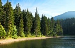 冷杉湖神奇sinevir结构树 免版税库存图片