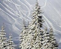冷杉雪结构树 库存照片
