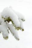冷杉绿色分支在雪盖帽下的 33c 1月横向俄国温度ural冬天 库存照片