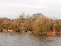 冷水场面春天冬天树鸟自然风景 库存照片