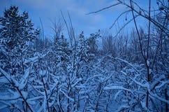 冷淡和多雪的冬天原野在12月 库存图片