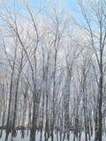 冷淡和晴朗的冬日 树枝用的霜包括 免版税库存图片