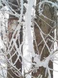 冷淡和晴朗的冬日 树枝用的霜包括 库存图片