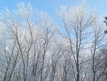 冷淡和晴朗的冬日 树枝用的霜包括 库存照片