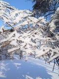 冷淡和晴朗的冬日 树枝用的霜包括 免版税库存照片