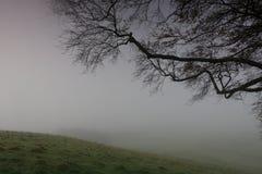 冷淡在雾的草和橡木分支 图库摄影