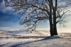 冷淡的冬天晚上 库存图片