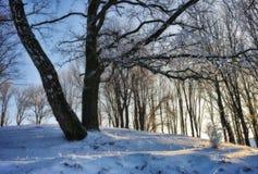 冷淡的冬天晚上 免版税图库摄影