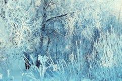 冷淡的冬天树枝冬天风景在冷的晴朗的天气的冬天森林里 库存图片