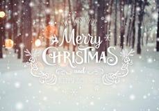 冷淡的冬天风景在与冷杉木的多雪的森林圣诞节背景和冬天被弄脏的背景中与文本的 库存照片