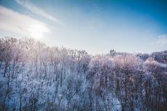 冷淡的冬天风景在多雪的森林里 免版税库存照片