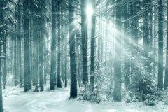 冷淡的冬天 免版税库存图片